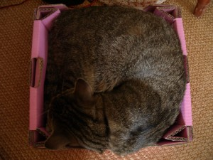 Willem in his carbon basket