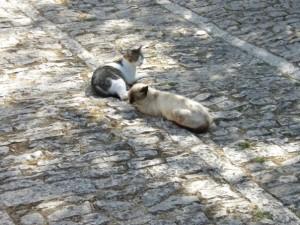 Non-quantum cats (in Erice)