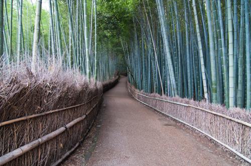 Bamboo Walkway in Arashiyama