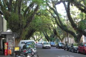 A typical street in Porto Alegre, Brazil.