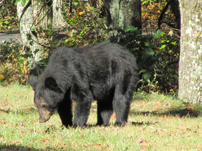 Connected at night, adventure during the day: Face to face meetings with a black bear included. He turned out to be a shy and friendly guy, luckily...