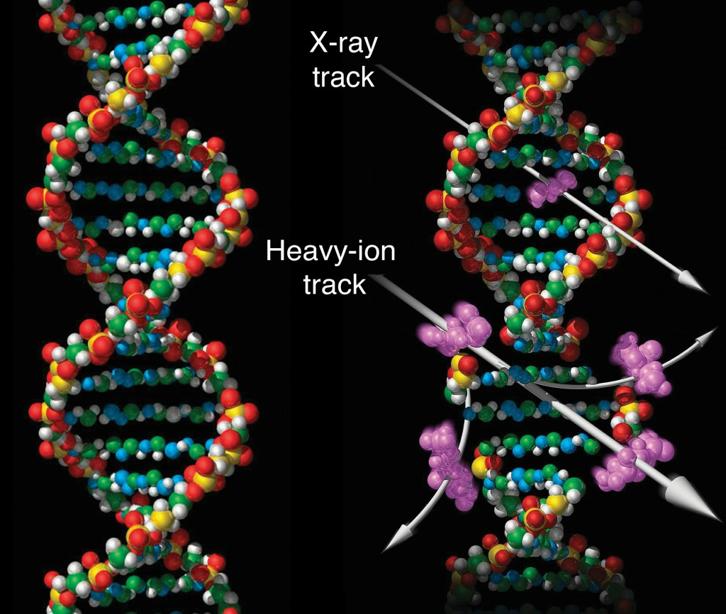 Different types of radiation treatment cause different kinds of damage to the DNA in a tumor cell. X-ray photons (top arrow) cause fairly simple damage (purple area) that cancer cells can sometimes repair between treatments. Charged particles—particularly ions heavier than protons (bottom arrow)—cause more and more complex forms of damage, resulting in less repair and a more lethal effect on the tumor. (Credit: NASA)