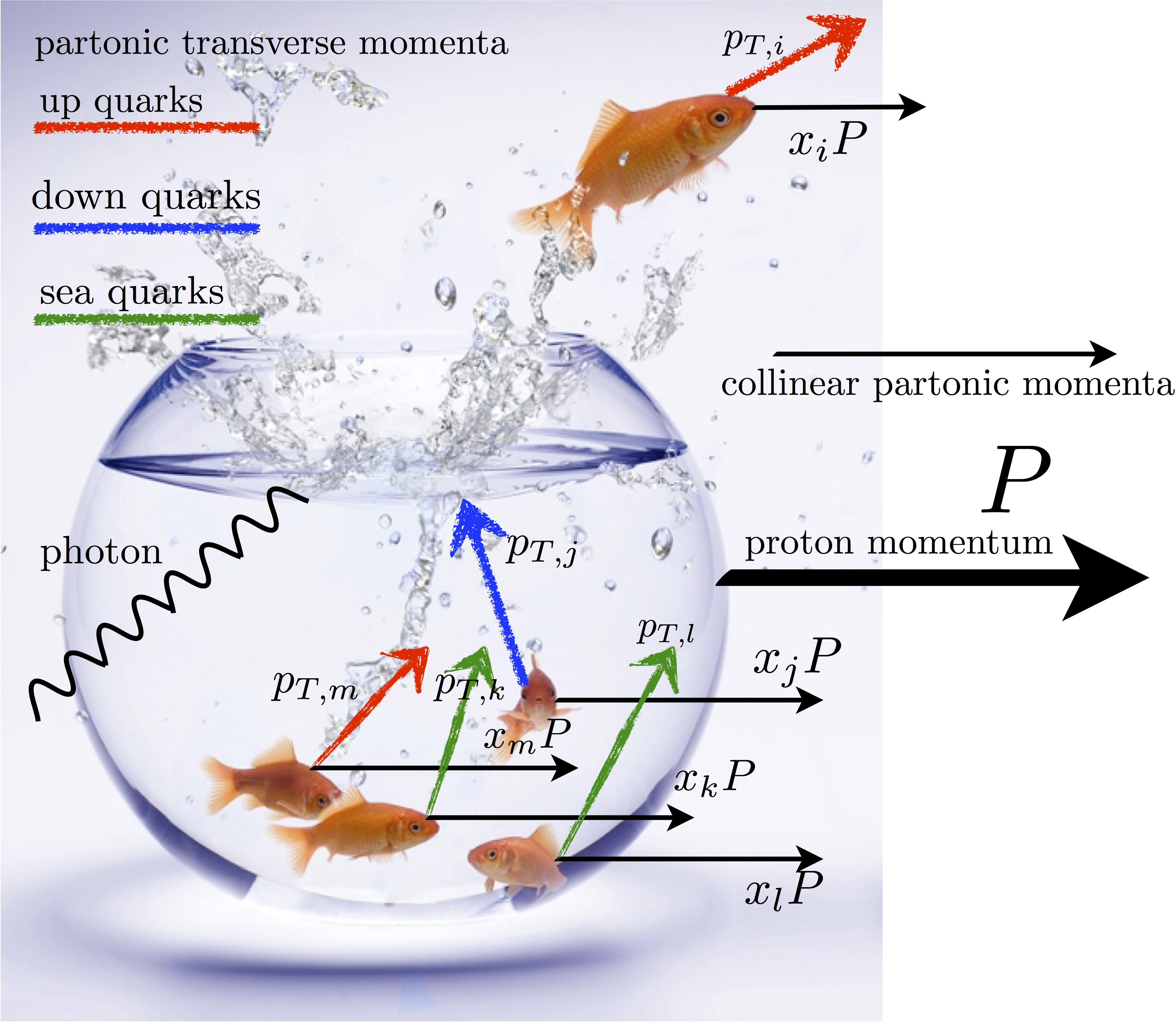 Quantum Diaries Solving Body Diagrams Partons Quarks And Gluons Are Like Fishes Confined Inside A Fishbowl The Proton
